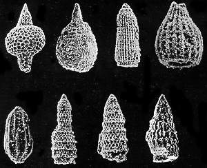 Shells of radiolaria