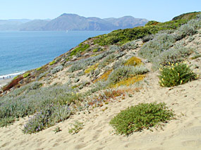 Sand dunes above Baker Beach