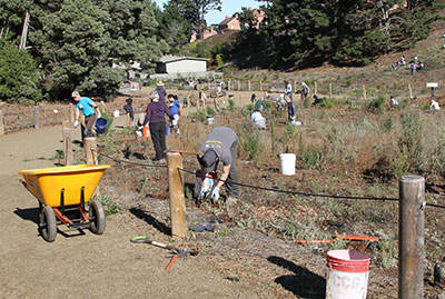 Volunteers care for native plants at El Polin.