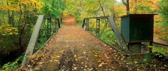 North Fork Quantico Creek Bridge in fall