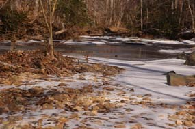 South Fork Quantico Creek in Winter