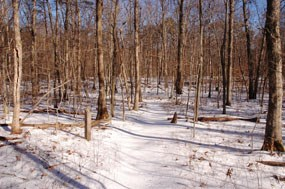 Farms to Forest Trail in the winter