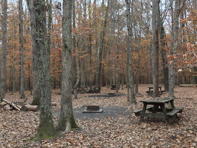 Four picnic tables and two firepits in a campsite in the woods with fall foliage