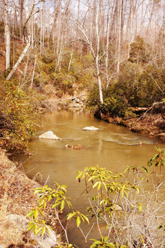 South Fork Quantico Creek