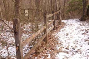 Fence-row leading to Geology site 4 on Cabin Branch Pyrite Mine Trail