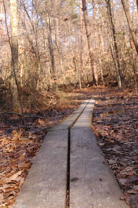Low lying area of Mary Bird Branch Trail with board walk.