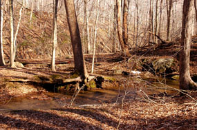 Tributary of South Fork Quantico Creek
