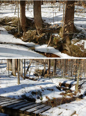(Above) Tree-lined creek on Farms to Forest Trail. (Below) Footbridge over creek mentioned above
