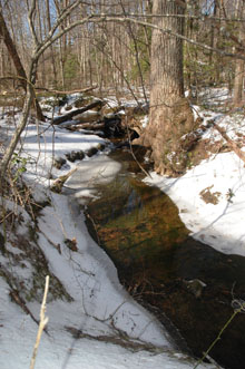 Small tributary of Quantico Creek