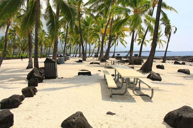 Picnic tables sit under the shade of coconut trees