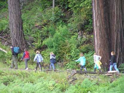 Adult and children hiking in the redwoods.