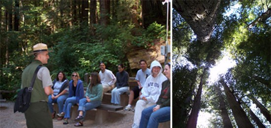 Left Image: Ranger talking in front of crowd.  Right Image: Looking up into tree canopy.