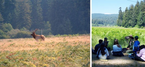 Left Image: Bull elk stands alone in field.  Right Image:  Ranger sits with kids overlooking prairie.