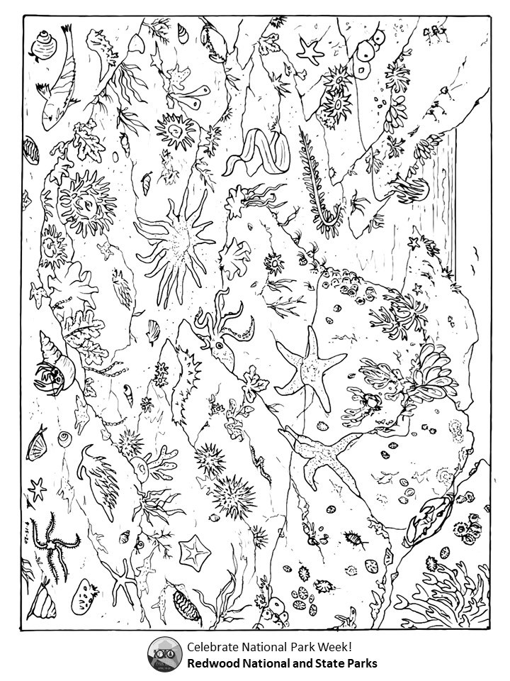 Redwood Forest coloring page with plant finding activity. | Paper ... | 960x720