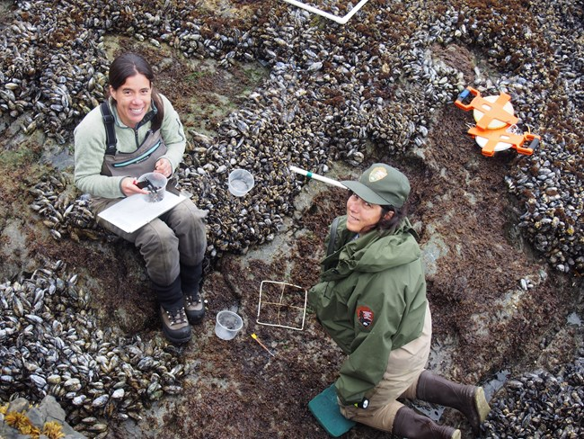 Researchers study tide-pool life.