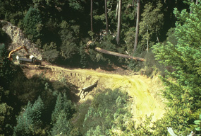 emerald creek before restoration