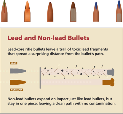Lead vs non-lead bullet diagram.