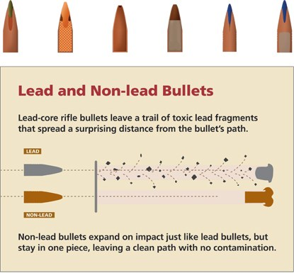 Lead Bullet Risks - Redwood National and State Parks (U.S. National ...
