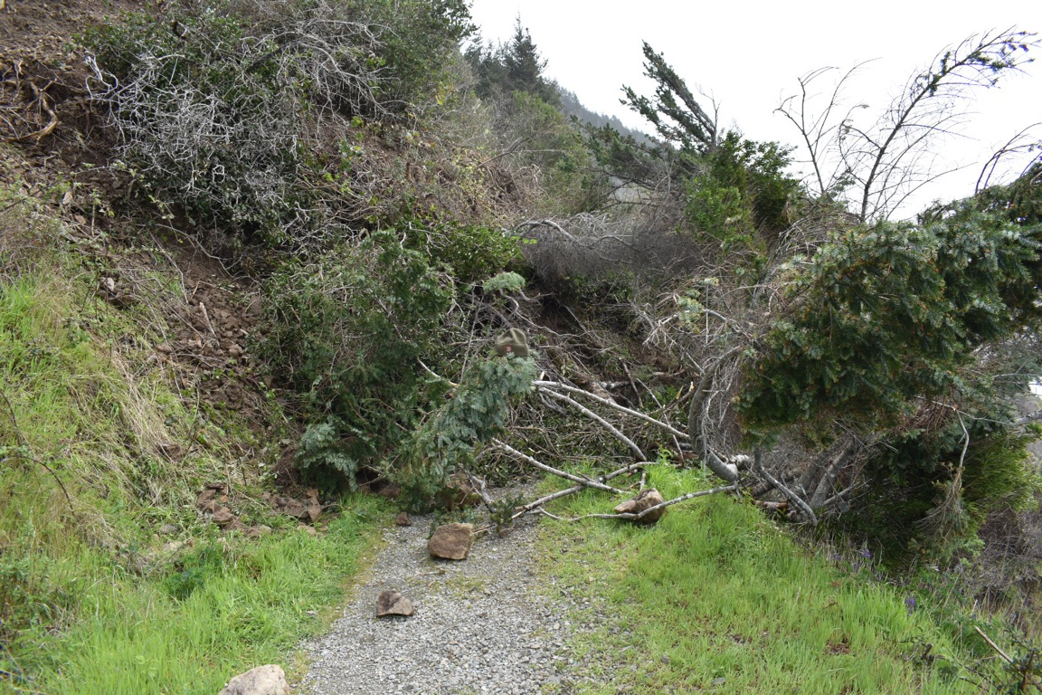 Trees and debris cover a trail