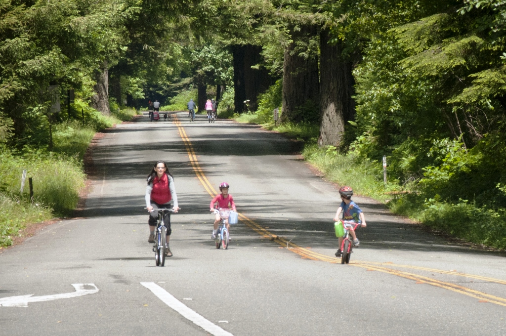 visitors ride bikes on a tree-lined parkway
