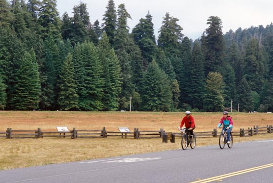 Bicyclists on the Newton B. Drury Scenic Parkway, Prairie Creek Redwoods State Park.