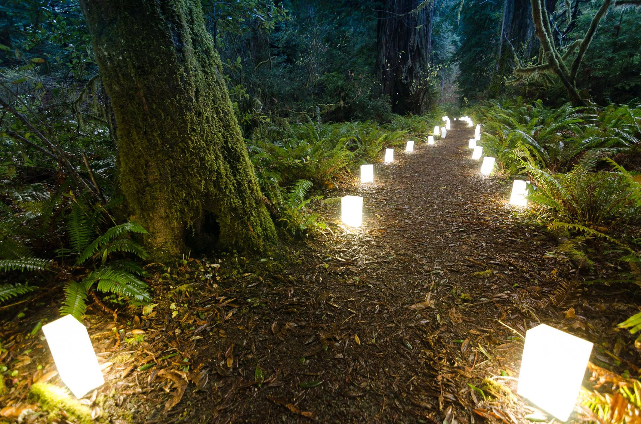 Luminaries line a forested trail