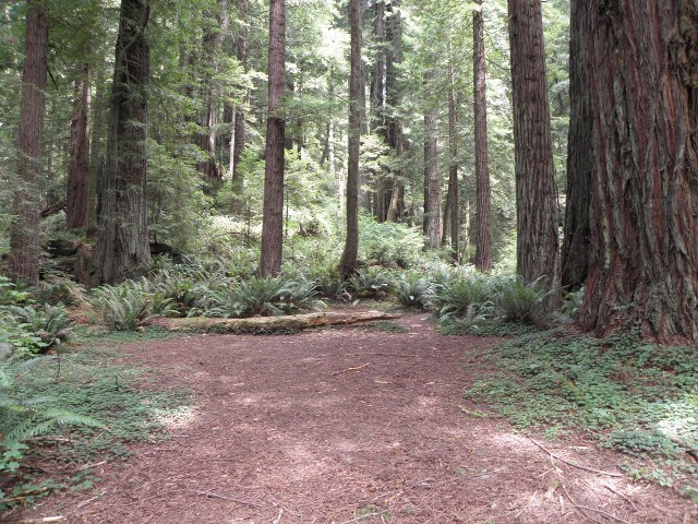 clearing with redwood trees surrounding the area