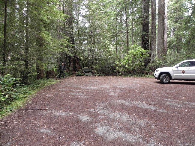 view of parking lot lined by redwood trees