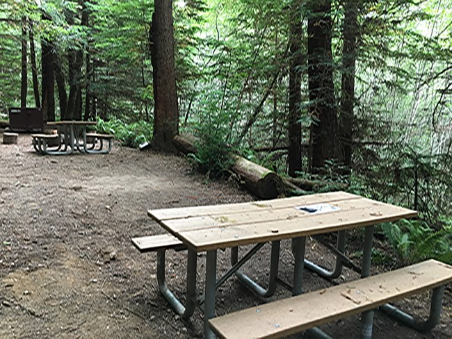 Picnic table and fire pit next to trees