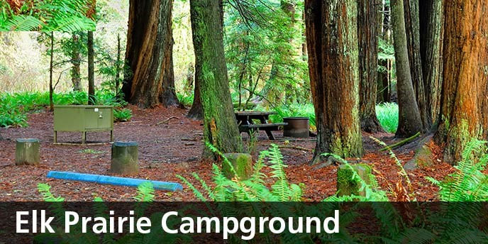 Developed Campgrounds Redwood National And State Parks