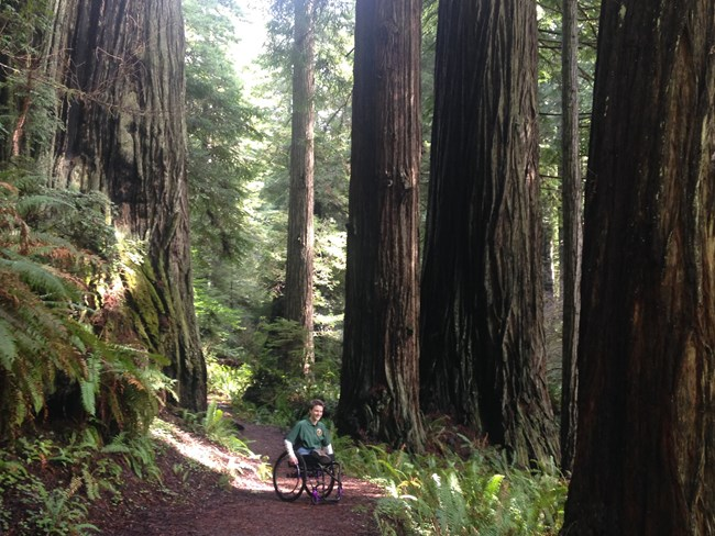 A women in a wheelchair looks at redwoods on a trail.