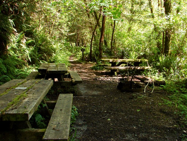 Picnic tables and fire pit