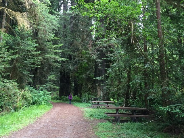 picnic tables along a trail with redwood trees nearby