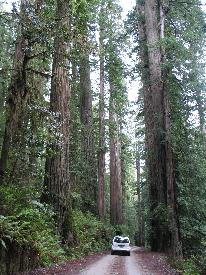 Scenic Drives Redwood National And State Parks U S