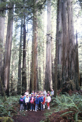 Kids in the redwoods!