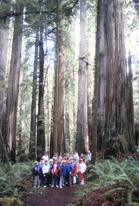 basic information redwood national and state parks u s national