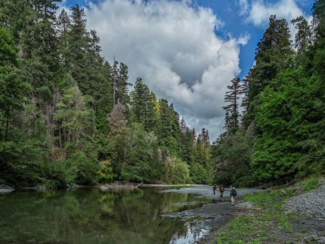 A smooth flowing creek runs between banks of tall trees. Three hikers are walking on gravel.