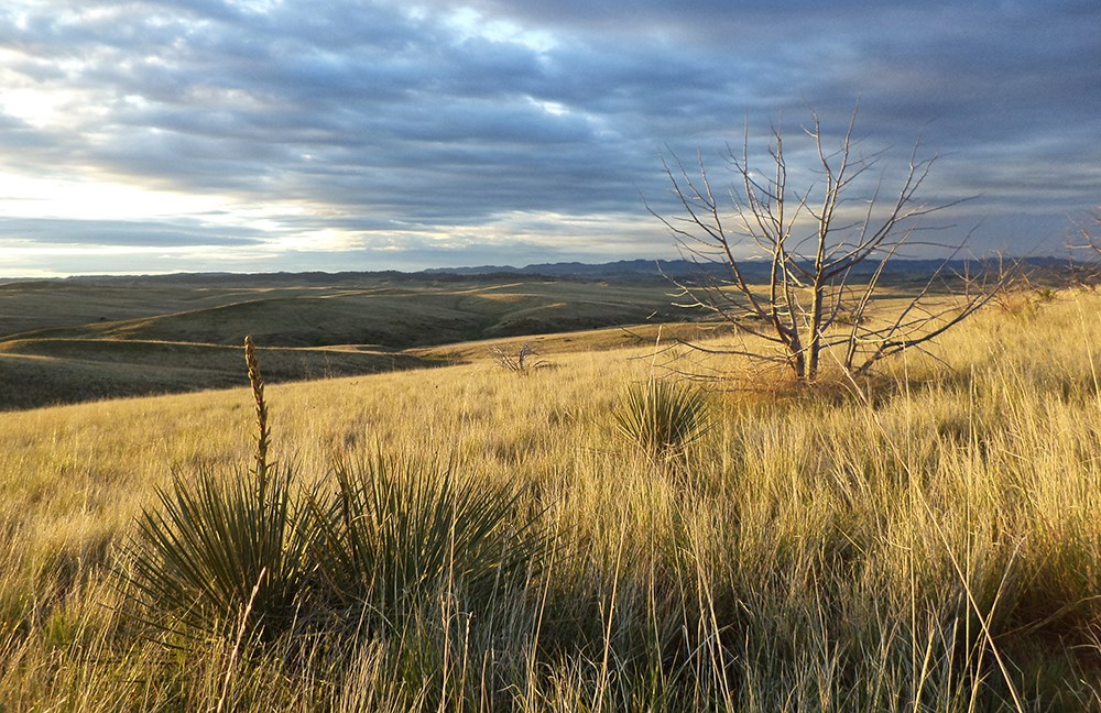 Rolling hills of grass with yucca and juniper as far as the eye can see