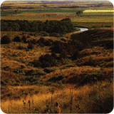 Rolling golden hills of prairie with small part of creek visible in the background.