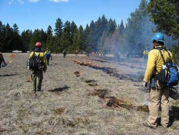 Firefighters work in field with ground lines of controlled burn