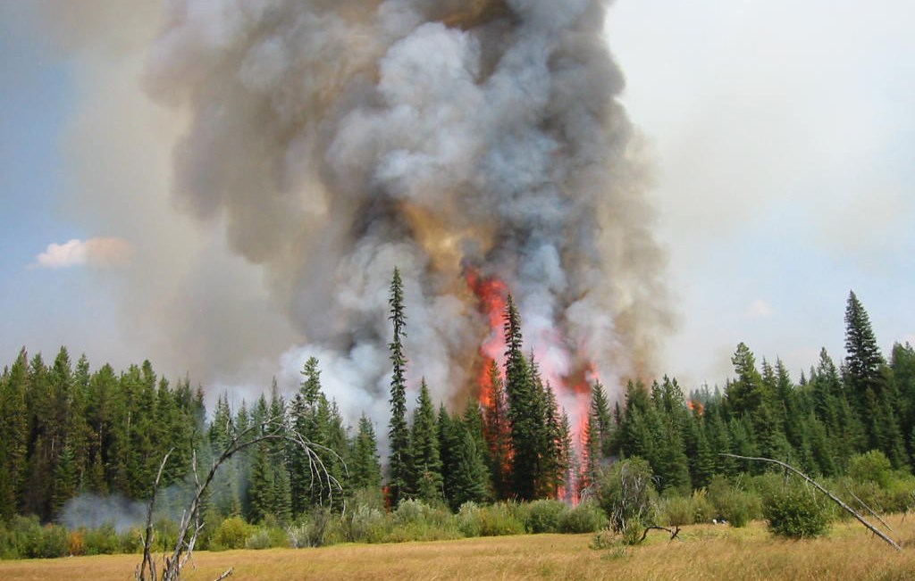 Column of fire and thick smoke rises out of conifer forest