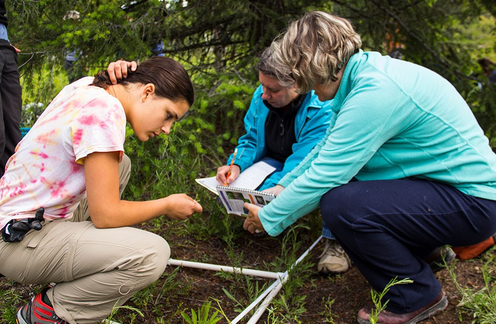 Teachers and student survey a plant plot for invasive species.