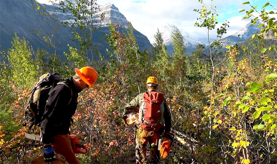 Two men in hard hats carry chainsaws through tall brush. Mountain peaks rise up in background.