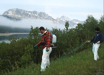 Two workers spray weeds near mountain lake