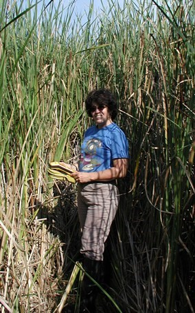 Scientist is surrounded by invasive cattails.