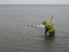 Researcher seining for fish in Lake Michigan