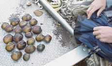 Researchers examine mussels along St. Croix River.