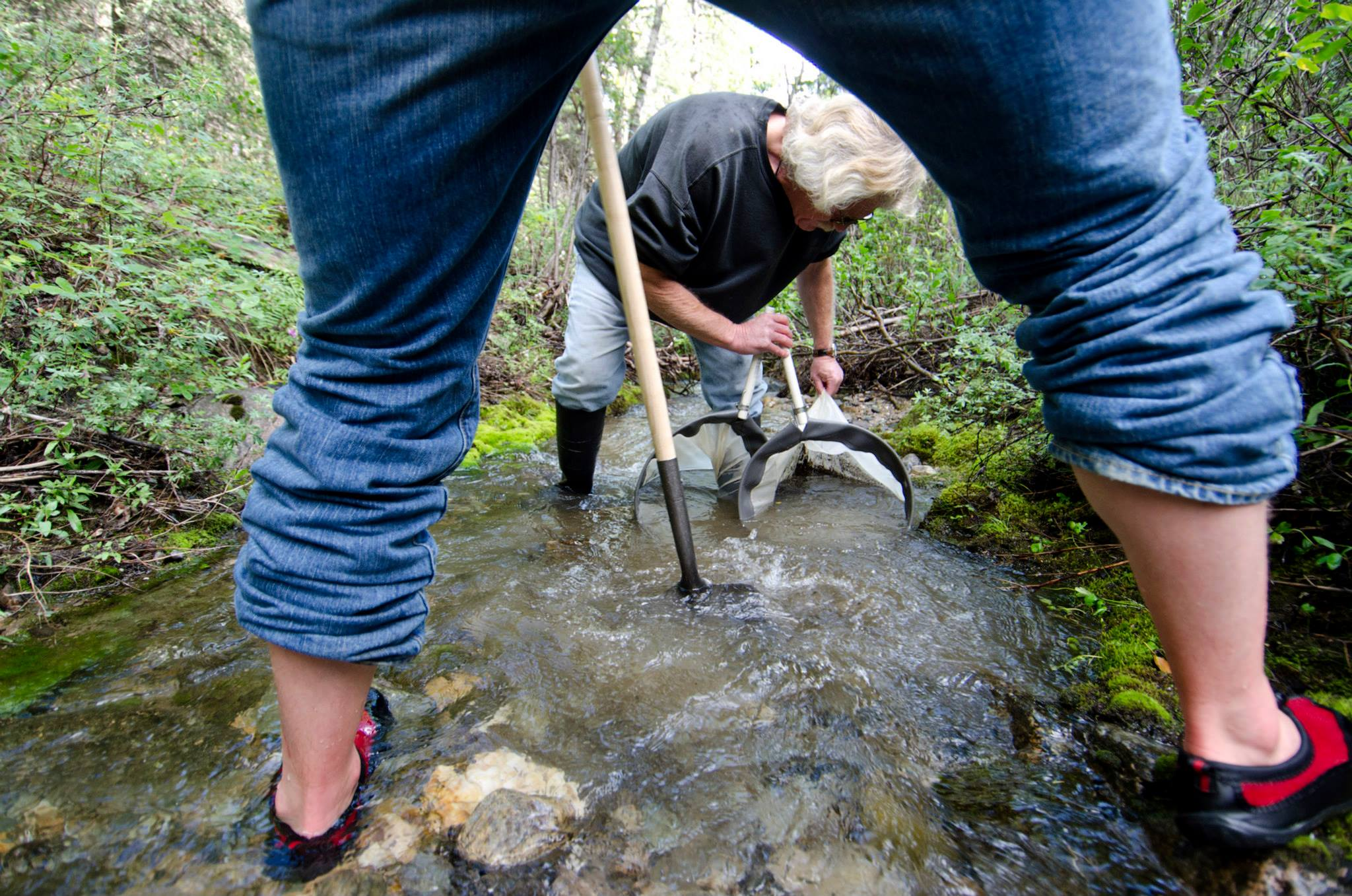 Researchers net aquatic macroinvertebrates in a stream