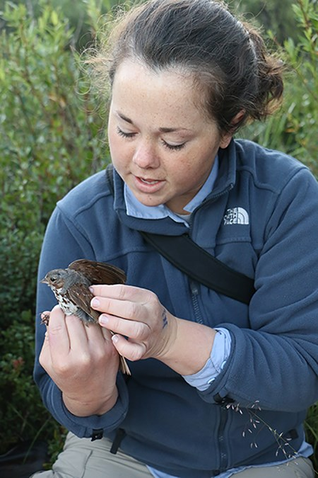 researcher puts geolocator on the back of a bird
