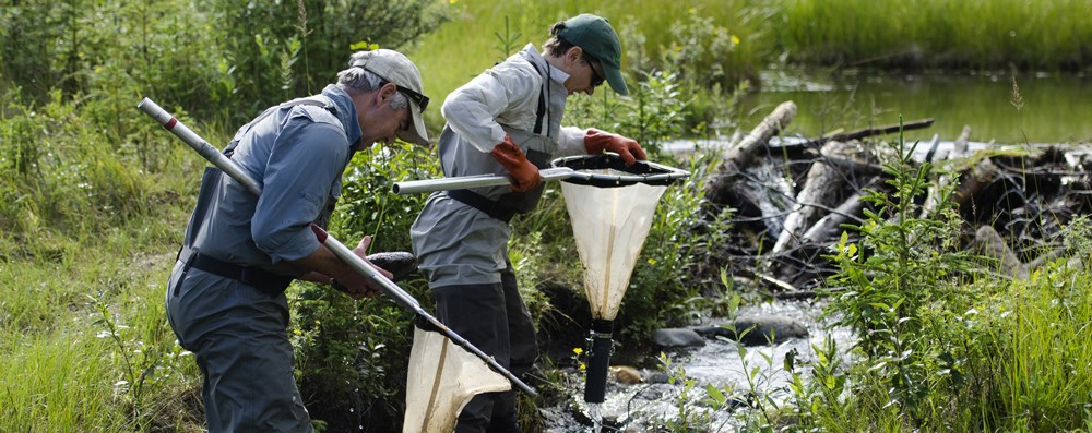Researchers net aquatic macroinvertebrates in Horseshoe Lake